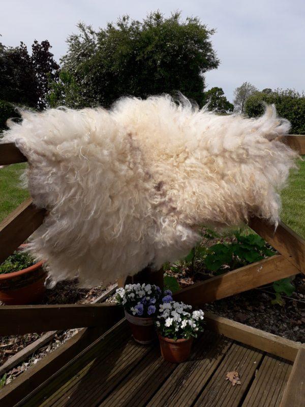 Icelandic Sheep Fleece Wool Rug