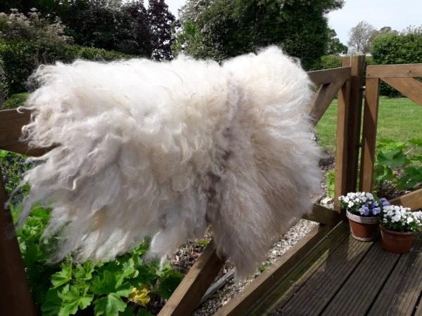 Icelandic Fleece Vegetarian Sheepskin Rug