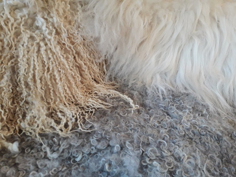 Fleeces from different sheep breeds